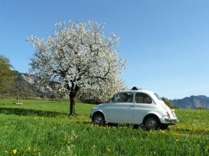 Das Auto ist mit Abstand das beliebteste Verkehrsmittel – auch im Thurgau. (Bild: daniel stricker / pixelio.de)