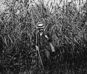 Mit Veston, Taschenuhr und Botanisierbüchse: Eugen Baumann bei der Feldarbeit im meterhohen Schilf vor der Insel Reichenau im Jahr 1906. (Bild: A. Suter)