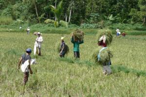 Kindern eine Zukunftsperspektive ermöglichen: Philippinische Familien bei der Arbeit.  (Bild: Fastenopfer)
