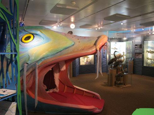 Der Märchenfisch ist bei Kindern beliebt. (Bild: zvg)