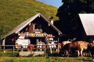 Von der Alphütte Tischhauser kommt der leckere Käse. (Bild: zvg)