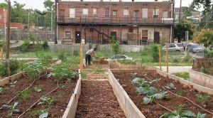 Gemüseanbau mitten in der Stadt. Das Thema Nachhaltigkeit wird auf allen Ebenen angesprochen. (Bild: zvg)