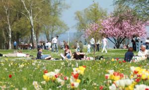 Der Seeburgpark – sicherlich einer der schönsten Plätze in Kreuzlingen. (Bild: Archiv)