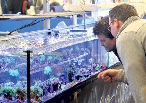 Aquarianer sind gut bedient an der Aqua-Fisch Messe.(Bild: zvg)