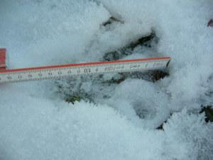 Abdruck Hinterfuss eines Bibers im Schnee. Die Grösse (17 cm) lässt auf ein erwachsenes Tier schliessen. (Foto: R.Winteler)
