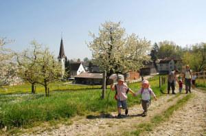 Wanderung bei Apfelblüte. (Bildnachweis: Thurgau Bodensee)