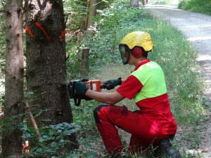 Forstwart Domenic Hug demonstrierte abschliessend die Haupttätigkeit eines Forstwartes, das Fällen eines Baumes, und erklärte worauf dabei zu achten ist. (Bild: zvg)