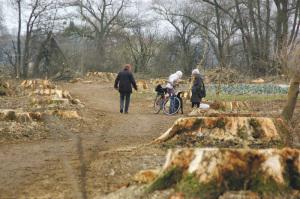 Nur noch grosse Baumstümpfe zeugen nach den Fällungen im Februar von der Pappelallee am Seerhein. (Bild: archiv)