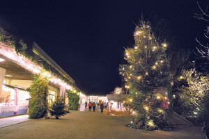 Der Weihnachtsbaum  ragt hoch empor.(Bild: zvg)