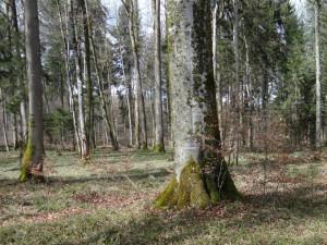 Durch die optimale Speicher- und Filterfunktion produzieren die Schweizer Waldböden Trinkwasser in bester Qualität und ersparen uns so hohe Wasseraufbereitungskosten. (Bild: zvg)