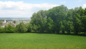 31 stattliche Kastanienbäume oberhalb von Tägerwilen sollen abgeholzt werden. (Bild: zvg)