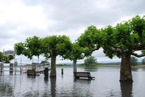 Hochwasser in Gottlieben. (Bild: archiv)