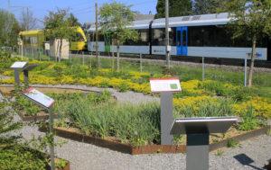 Der Arzneipflanzgarten in Uttwil ist für die Öffentlichkeit zugänglich. (Bild: zvg)
