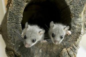"""""""Schau mir in die Augen, Kleines!""""   (Bild: Pro Natura, D. Manhart)"""